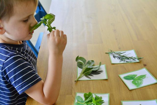 Actividades Sensoriales para Niños en Casa - Sentido del olfato